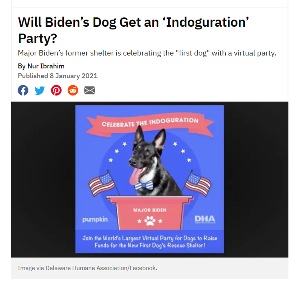 Snopes Snuggles Biden: It's 'True' His Rescue Dog Gets an 'Indoguration' Party!