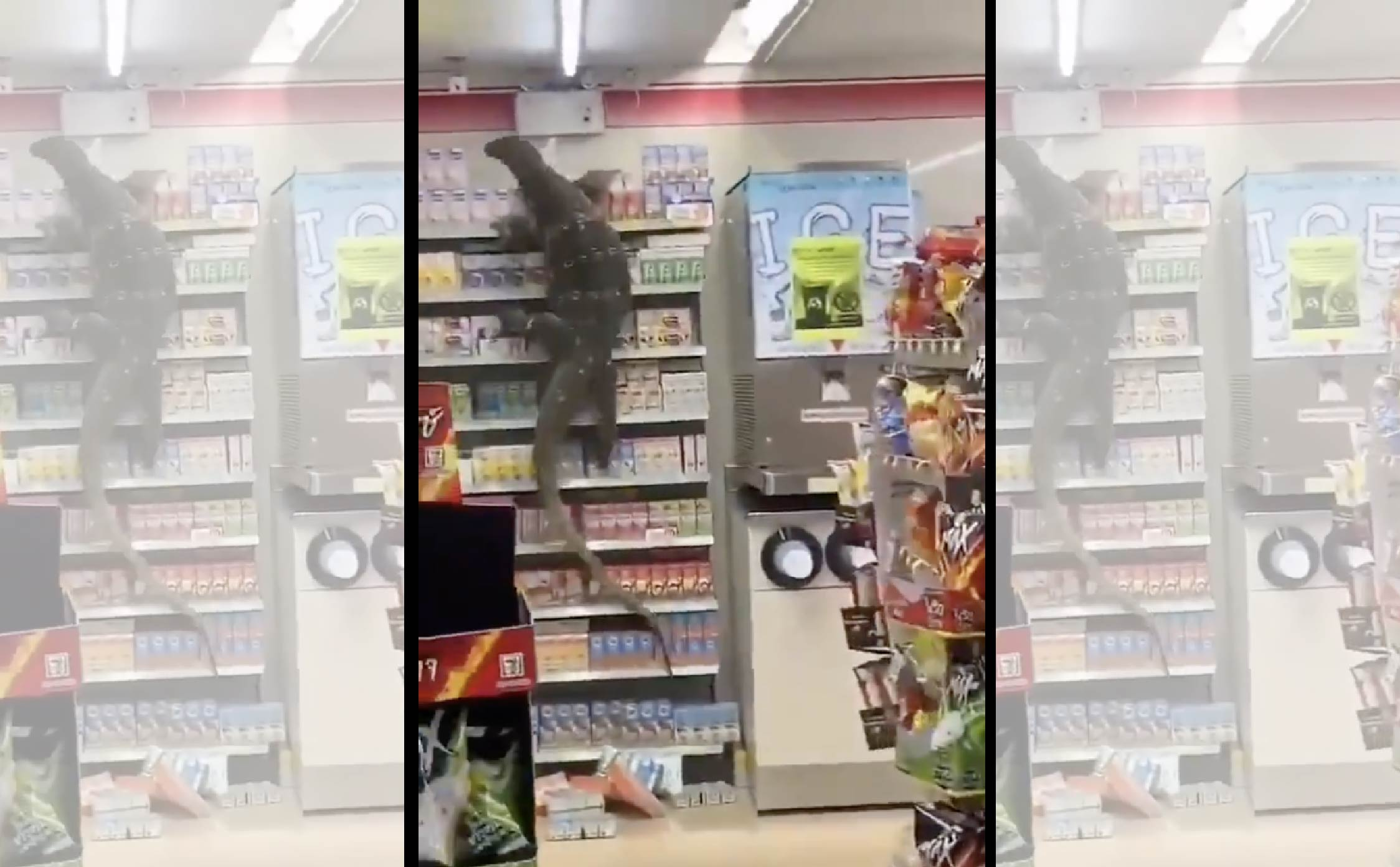 [VIDEO] What Would You Do If You Saw This On Aisle 2 in Your Grocery Store?